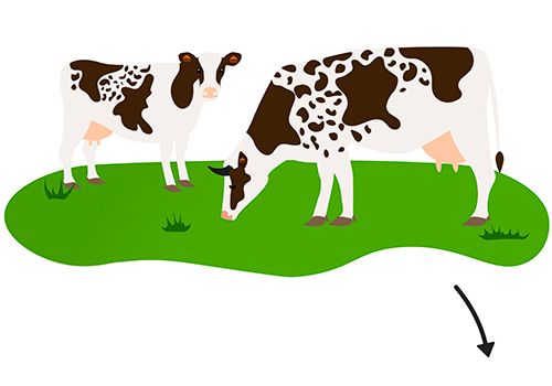 illustration vaches au pâturage